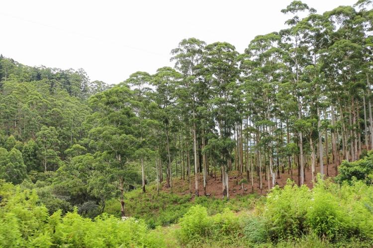 Ohiya NatnZin Sri Lanka