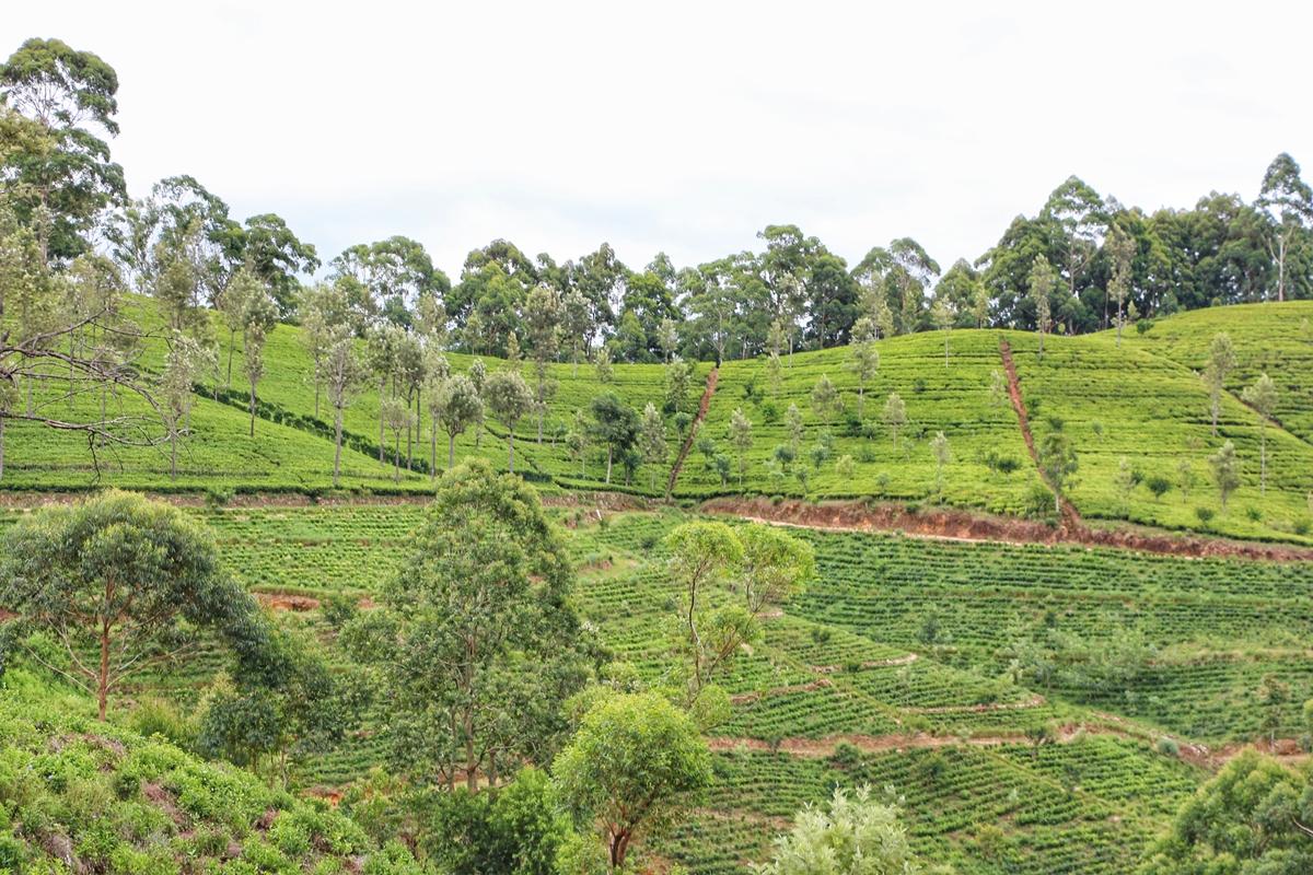 Kandy Ella Sri Lanka