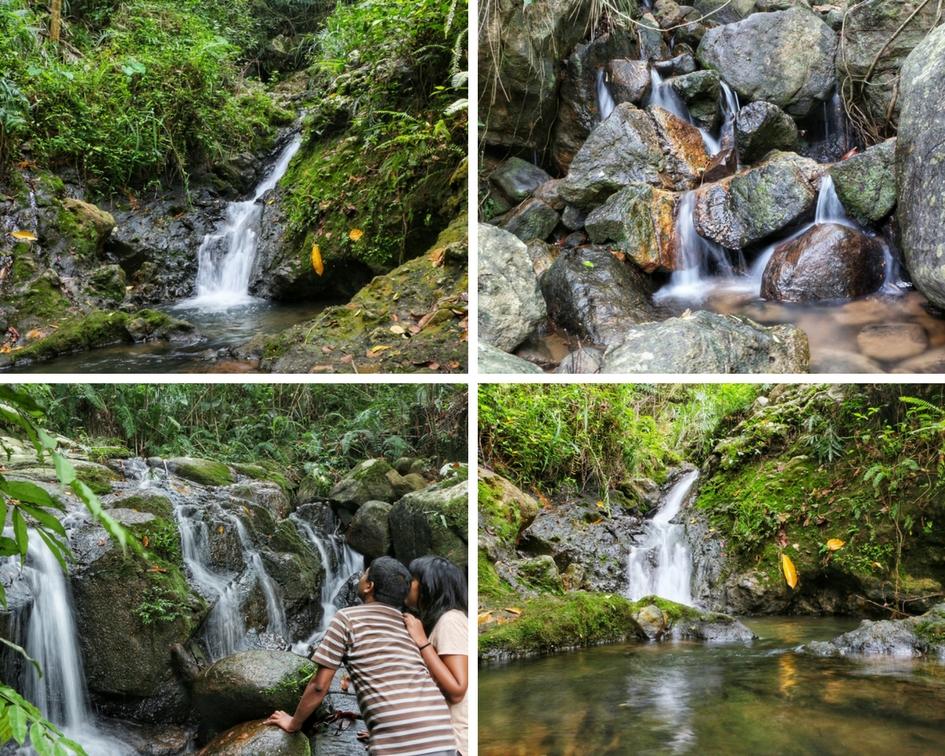Sinharaja Rain Forest NatnZin