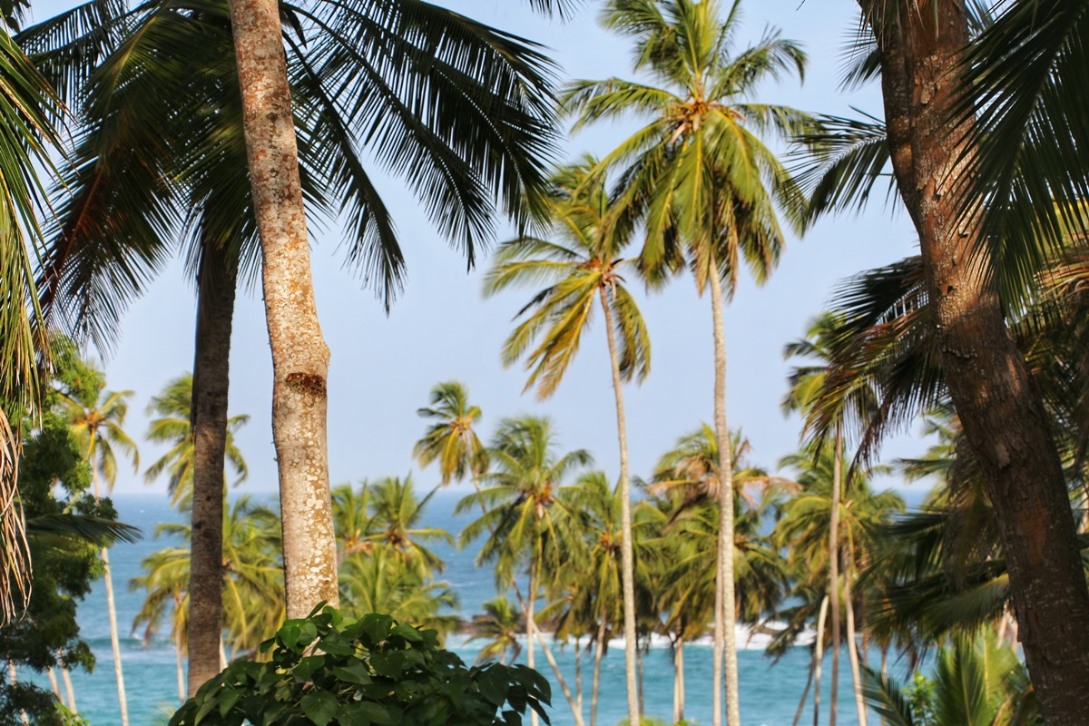 Places Stay Tangalle NatnZin