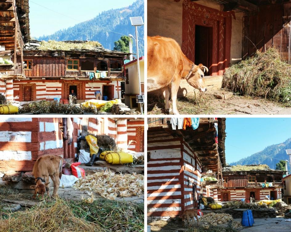 Village NatnZin Manali