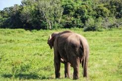 Elephant-Safari-NatnZin