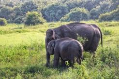 Kaudulla-Habarana-Polonnaruwa