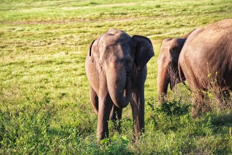 Sigiriya Elephants NatnZin